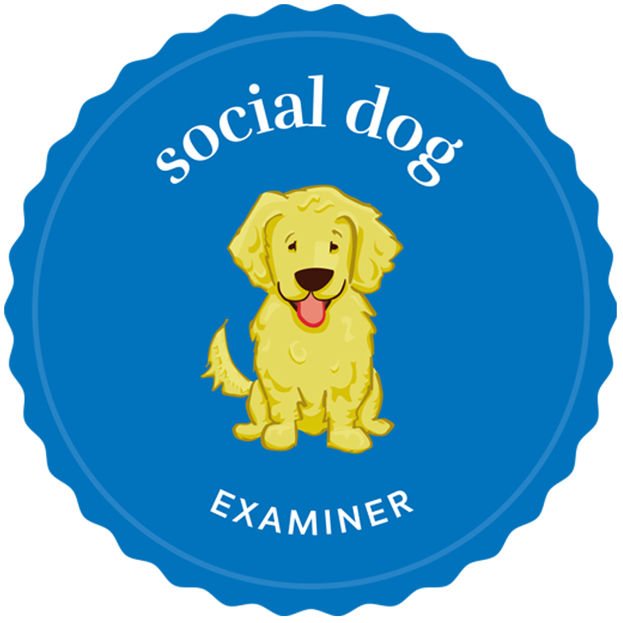 social dog examiner badge logo