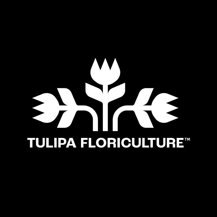 Tulipa Floriculture concept